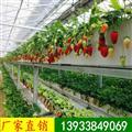 气雾栽培设备|立体种植槽|立体栽培槽|草莓滴灌种植槽